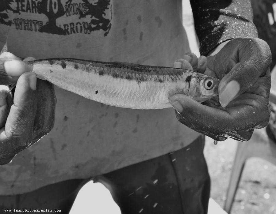 Pesce e unghia
